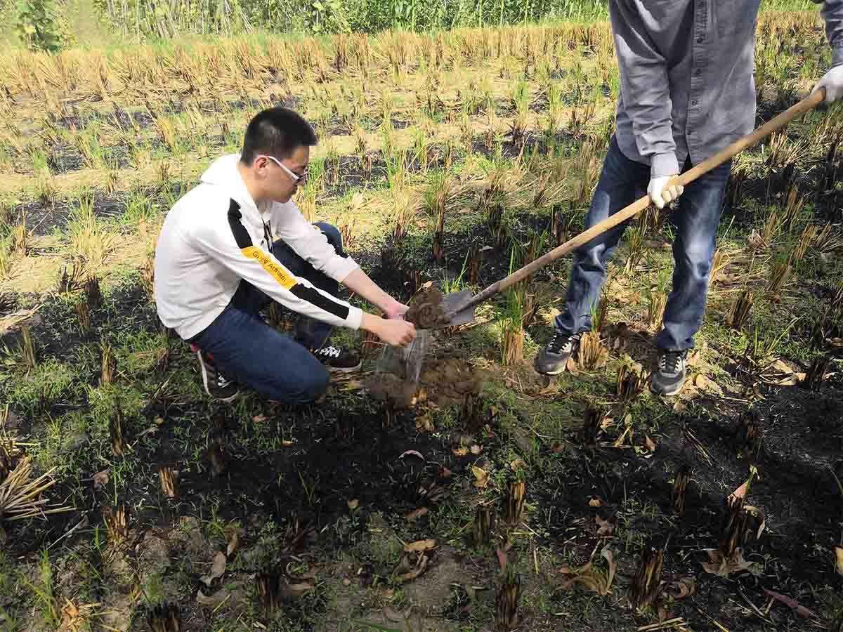 耕地质量等级评价项目
